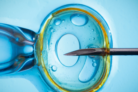 INTRA CYTOPLASMIC SPERM INJECTION (ICSI)